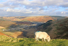 Sheep Overlooking A Valley In ...