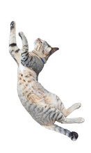 Funny Cat Jumping Isolated On ...
