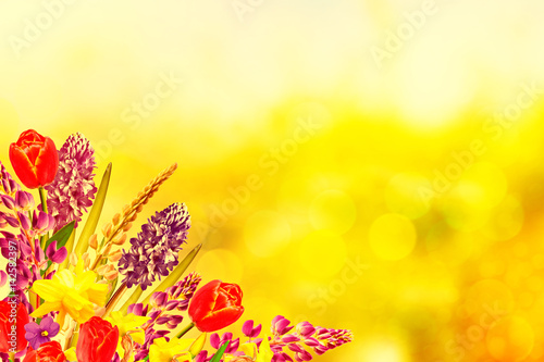 Fotobehang Zwavel geel Bright and colorful spring flowers daffodils and tulips
