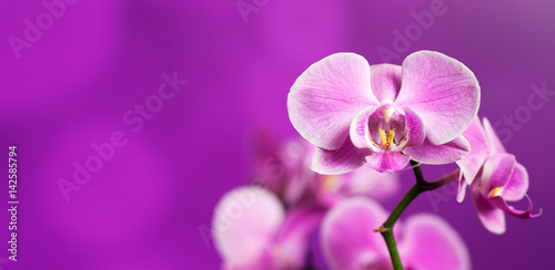 Foto op Canvas Orchidee Orchid on purple
