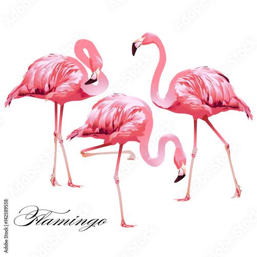 Canvas Prints Tropical Bird Flamingos. Vector.