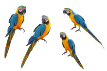 A Collection Of Parrot Macaws ...