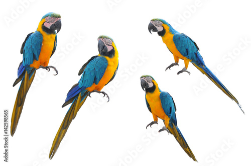 Foto op Canvas Papegaai A collection of parrot macaws on a white background.