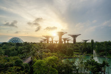 Singapore Supertrees In Garden...