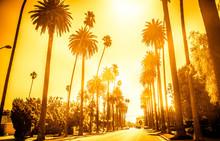 Street In Beverly Hills, Calif...
