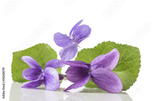Spoed Foto op Canvas Iris Violet flower, detailIt is also known as Sweet or English Violet