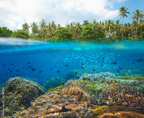 Poster Coral reefs Coral reef with many small colorful fish in tropical sea on a background of coast island