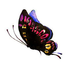 color butterfly, watercolor, isolated on a white