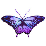 Fototapeta Motyle - blue butterfly,watercolor,isolated on a white