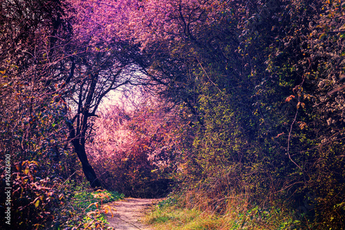 Summer landscape with footpath in magic garden. Nature landscape