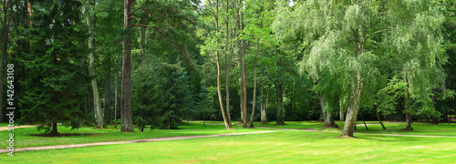 Spoed Foto op Canvas Lime groen Green forest in summer