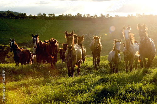 Photo  several horses galloping on meadow with beautiful back light