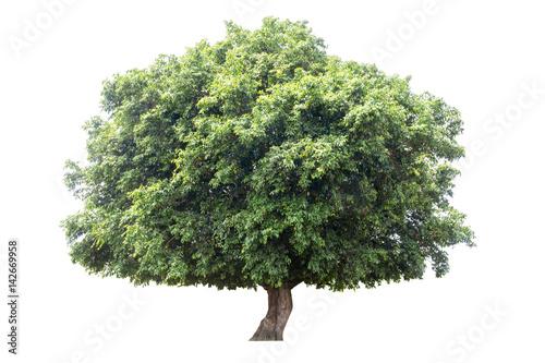 pojedyncze-drzewo-izolowane