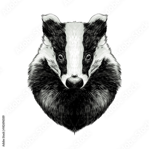 Photo head badger symmetric, sketch vector graphics color picture