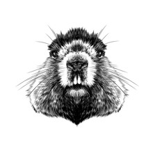 Head Groundhog Hairy Symmetric...