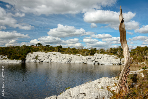 Fotografie, Obraz  Old Scots Pine (Pinus Sylvestris) at Muckross Lake in Killarney National Park,Ke