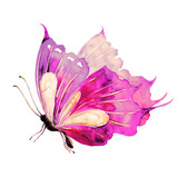 Fototapeta Motyle - beautiful violet  butterfly, isolated  on a white,watercolor