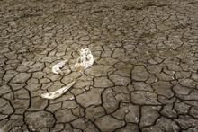 Animal Bones At Mud Cracked Ground