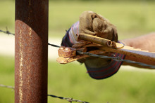 Fencing: Man Working On Old Barb Wire Farm Fence With Hand Fence Stretcher