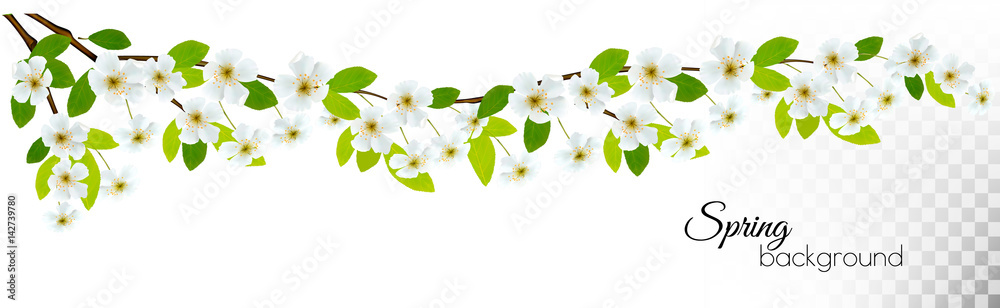 Fototapeta Nature background with spring blossom of cherry. Vector.
