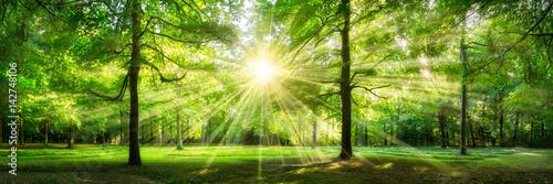 Fotobehang Bossen Grünes Wald Panorama im Sonnenlicht
