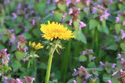 Fiori Di Campo Gialli.Fiori Di Campo Viola Con Fiore Giallo Buy This Stock Photo And