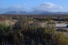 Protected Area At Corralejo In The North Of Fuerteventura
