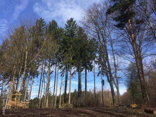 Fototapeta Frühling im Wald obraz na płótnie