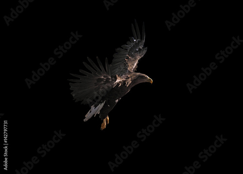 Poster Aigle Eagle is flying beautiful isolated at black