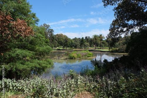 Fototapeten Wald Botanischer Garten 6