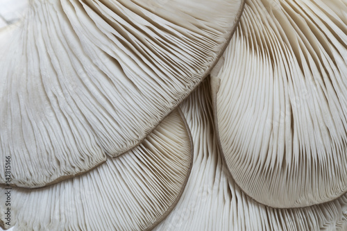 Photo sur Toile Les Textures Oyster mushrooms