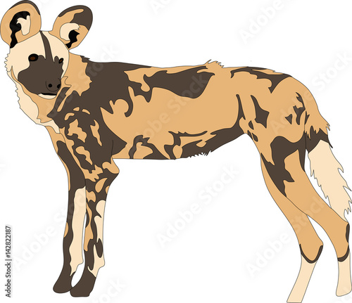 Photo  Portrait of a hungry and firerce wild dog, hand drawn vector illustration isolat