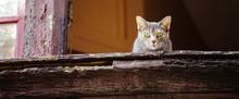 Beautiful Grey Cat On Old Wind...