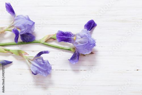 Poster Iris iris on white wooden background
