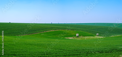 Foto op Plexiglas Groene Green fields clear blue sky