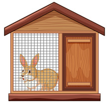 Cute Rabbit In Cage