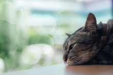 A Lonely Cat Sleep On The Tabl...