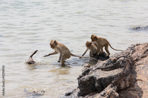 Deurstickers Asia land Family of monkeys swimming in the sea
