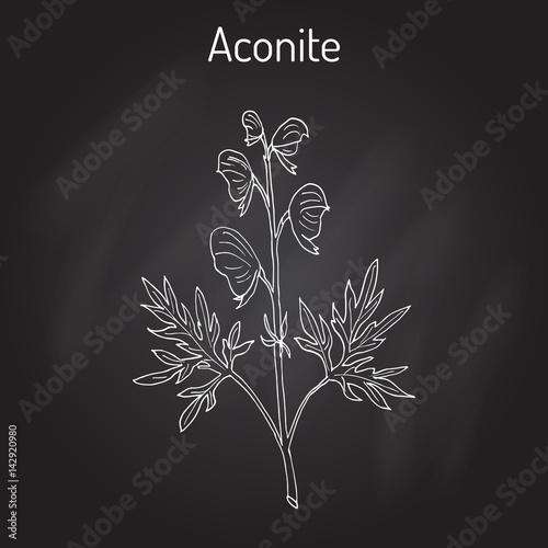Photo Aconite Aconitum napellus , flowering plant