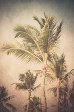 Vintage Textured Tropical Palm...