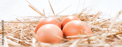 Fotografia, Obraz  Vier Hühnereier im Stroh