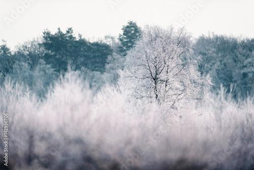 nagi-drzewo-z-hoarfrost-w-zima-krajobrazie