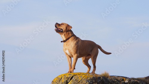 Photo  Dog on a rock