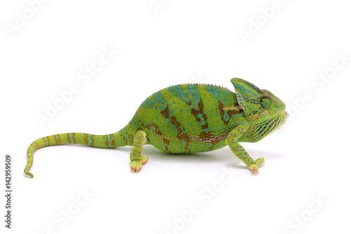 Staande foto Kameleon chameleon isolated on white background