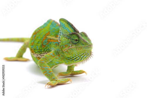 Photo sur Aluminium Cameleon chameleon isolated on white background
