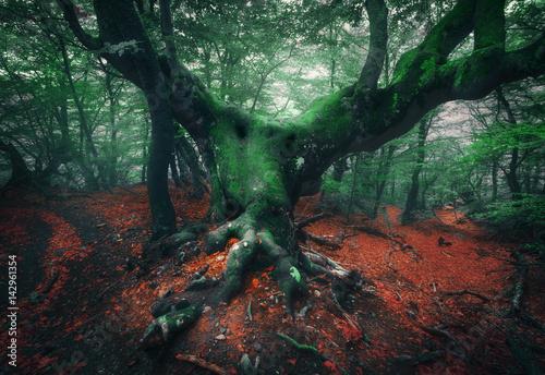 przerazajace-drzewo-mistyczny-ciemny-mglisty-las-z-stare-drzewo