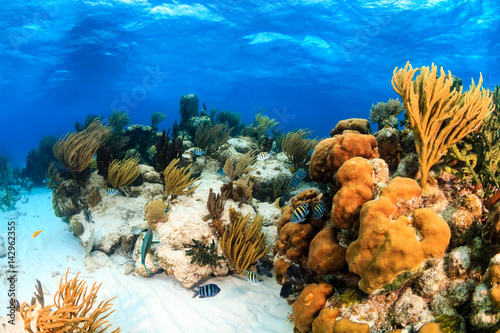Spoed Foto op Canvas Onder water Colorful shallow water coral lagoon in the tropics