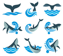 Wild Whale In Sea Waves And Water Splashes Vector Icons