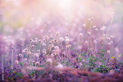 Poster Rose clair / pale Meadow flowers, beautiful fresh morning in soft warm light. Vintage autumn landscape blurry natural background.