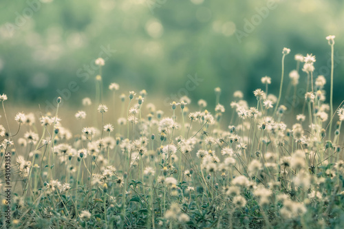 Deurstickers Olijf Meadow flowers, beautiful fresh morning in soft warm light. Vintage autumn landscape blurry natural background.